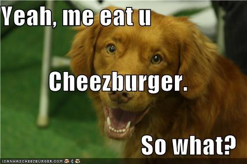 Cheezburger Image 4347055616