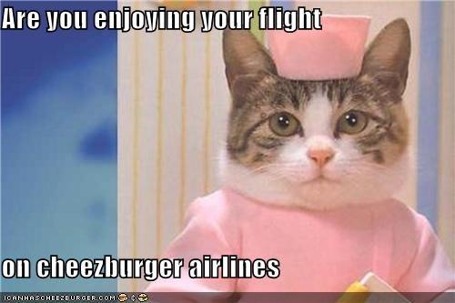 Cheezburger Image 4348034560
