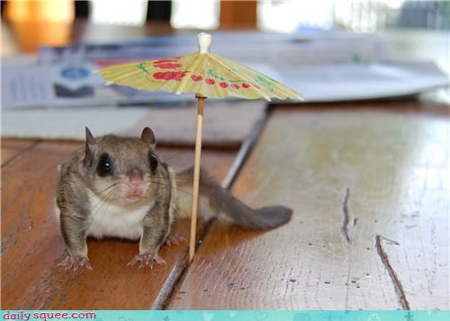 flying squirrel pet reader squee tiny umbrella