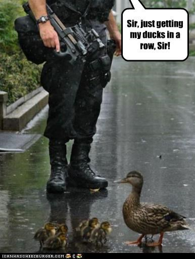 animals ducks military pun recruit soldier