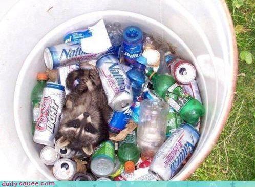 beer cans drinks raccoon recycle bin - 4348931840