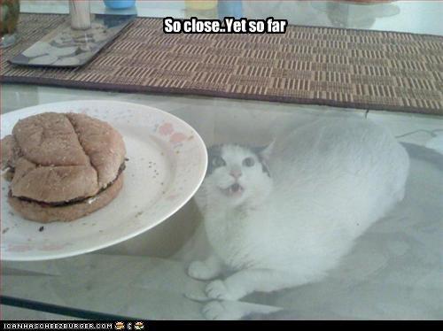 Cheezburger Image 4349145600