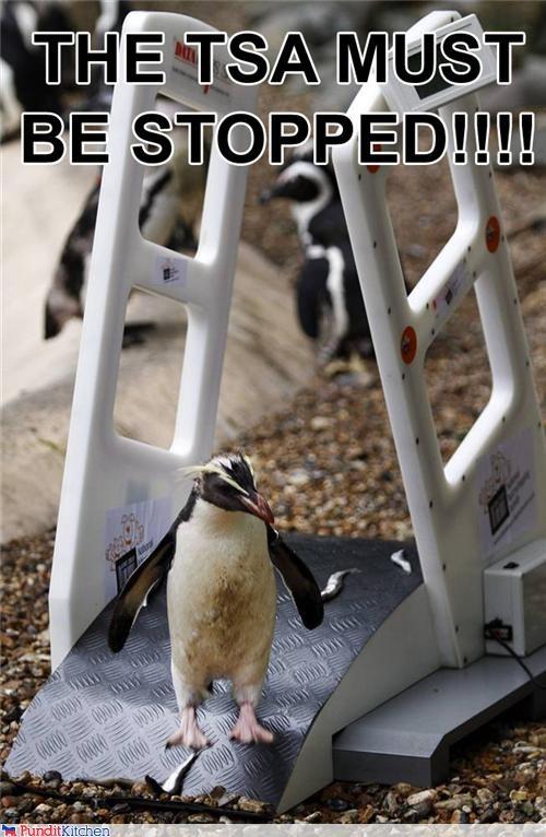 penguins TSA - 4349818880