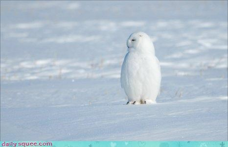 acting like animals,all white,bird of prey,blending in,blizzard,disappointed,FAIL,field,giving up,Owl,shades,shading,snow,snowy owl,standing out,upset