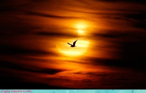 acting like animals,background,flying,here comes the sun,lyrics,parody,rewrite,seagull,silhouette,song,sun,the Beatles