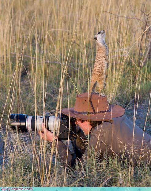 acting like animals,attention,distracted,ignorant,looking up,meerkat,not,oblivious,overhead,paying,photographer,pointing