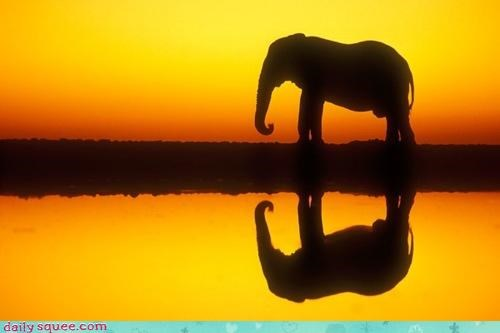acting like animals,ballad,elephant,emily dickinson,poem,poetry,reflection,reminder,rewrite,silhouette,sunset,water