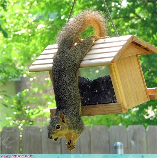 bird bird feeder mistake oopsie snack squirrel