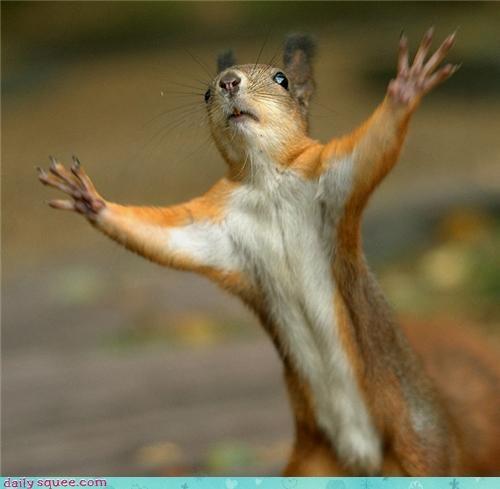 arms dream come true picture it squirrel surprise - 4350395648