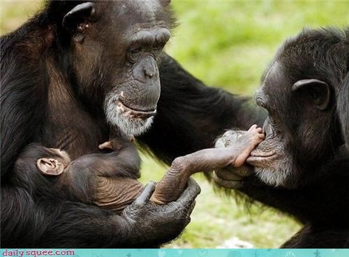 Babies baby chimpanzees daddy dads families feet foot kisses mommy moms parenting parents squee - 4350425856