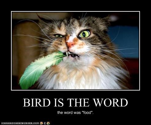 "BIRD IS THE WORD the word was ""food""."