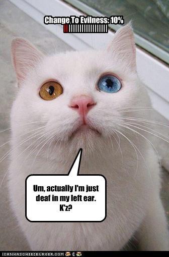 Change To Evilness: 10% || |||||||||||||||||| Um, actually I'm just deaf in my left ear. K'z?