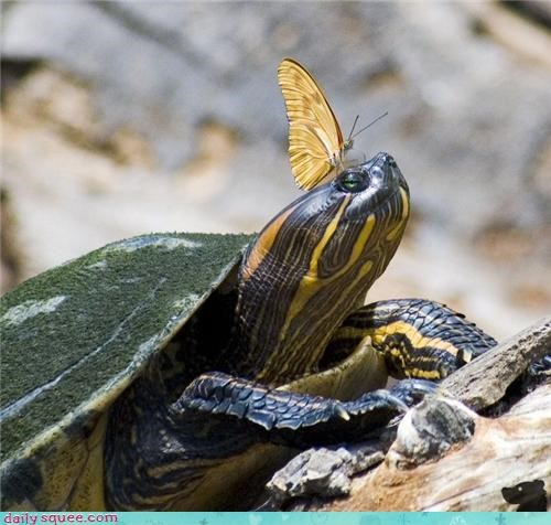 Cute pic of a turtle with a cute butterfly on his nose.