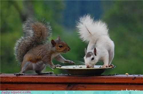 albino noms snack squirrel - 4350513408