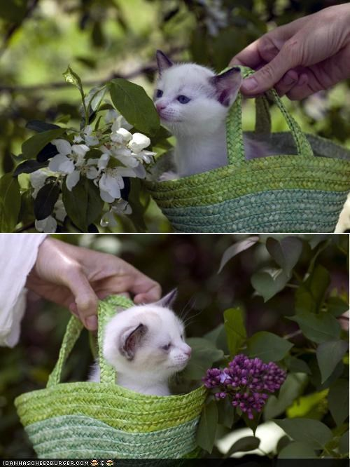 basket,cyoot kitteh of teh day,flowers,garden,kitten,nature