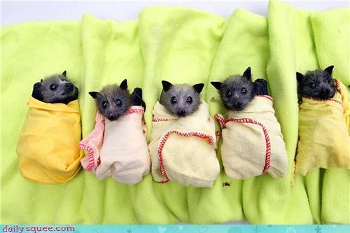 baby bats blankets bundle Hall of Fame squee wrapped up - 4351211776