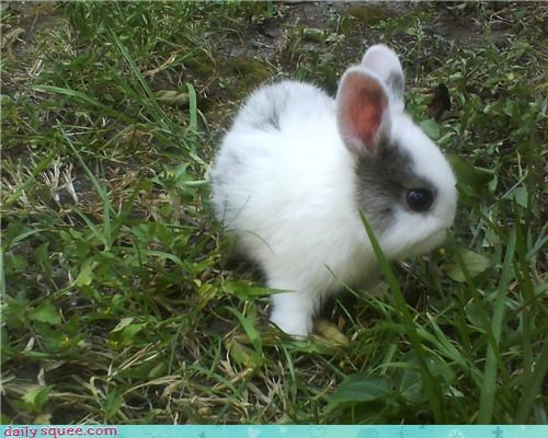 bunny fluff grass happy bunday tiny - 4351262720
