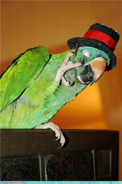 hat,itch,parrot,pet,reader squee