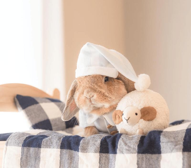 a funny list of a stylish bunny