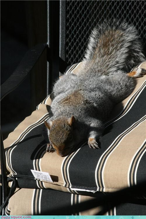 deck chair nap sleeping squirrel sunbathing sunburn - 4352185856