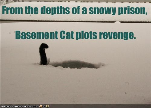 basement cat caption captioned cat depths plot plotting prison revenge snow snowy trapped - 4352262912
