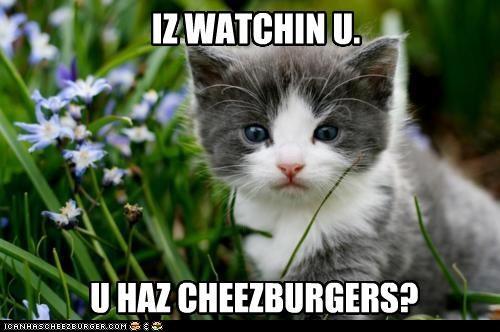 Cheezburger Image 4352431872