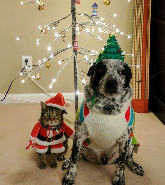 christmas dogs Cats funny - 4352773