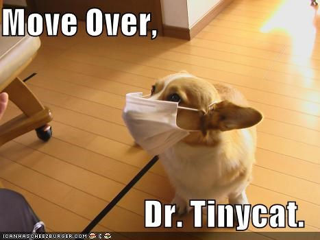 competition contest corgi doctor dr tinycat name naming poll