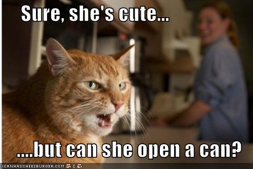 abilities,can,caption,captioned,cat,cute,girlfriend,important,open,question,skills,tabby