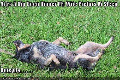 after,beans,dinner,gas,german shepherd,odor,outside,preference,sleeping,smell,smelly,wife