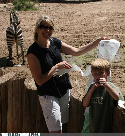 animals,kids,peeing,photobomb,zebra,zoo