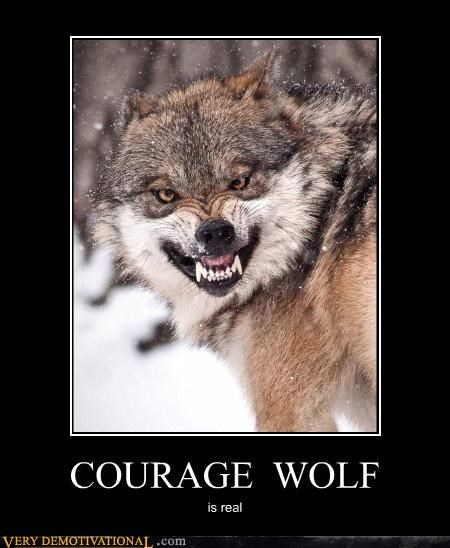 angry animals meme nature wolf - 4354076928