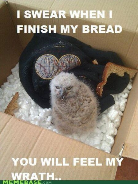 box bread hates you Memes owlet - 4354332928