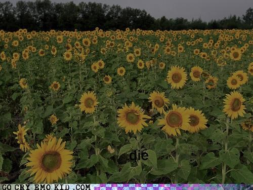 die,emolulz,field,flowers,happy