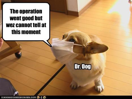 The operation went good but wez cannot tell at this moment Dr. Dog