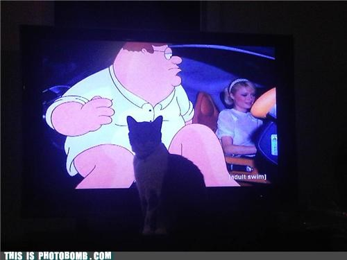 adult swim,animals,Cats,Caturday,censorship,family guy,language,photobomb