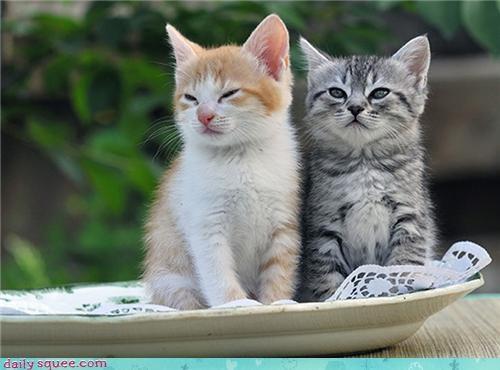cute face kitten squee spree - 4355421184