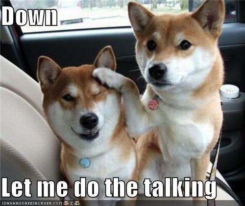 be quiet friends shiba inu talking - 4355473408