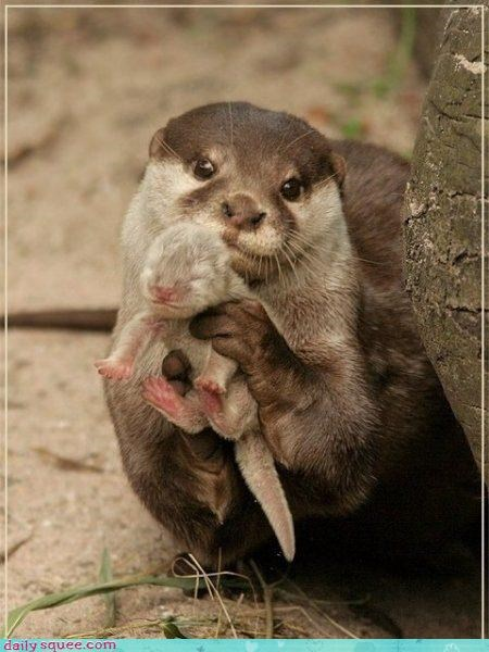 baby cute otter - 4355495680