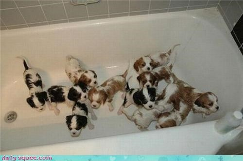 baby cute puppy squee spree - 4355508224