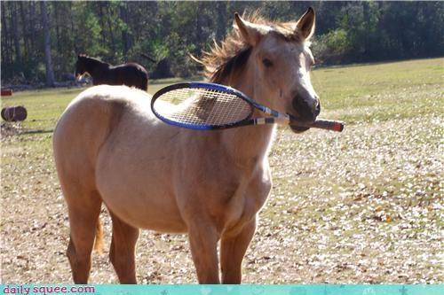 game horse human tennis - 4355517440