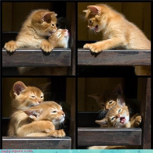 baby cat kitten - 4356031744