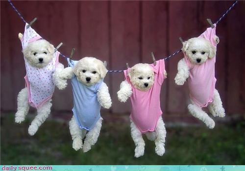 costume cute onesie puppy squee spree - 4356073472