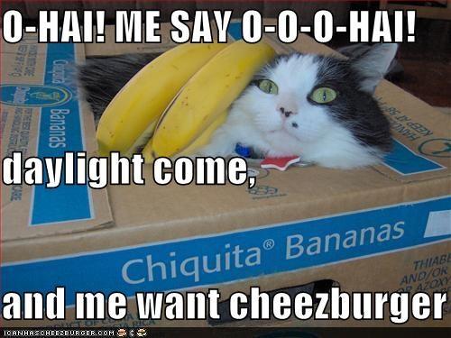 Cheezburger Image 4356121344