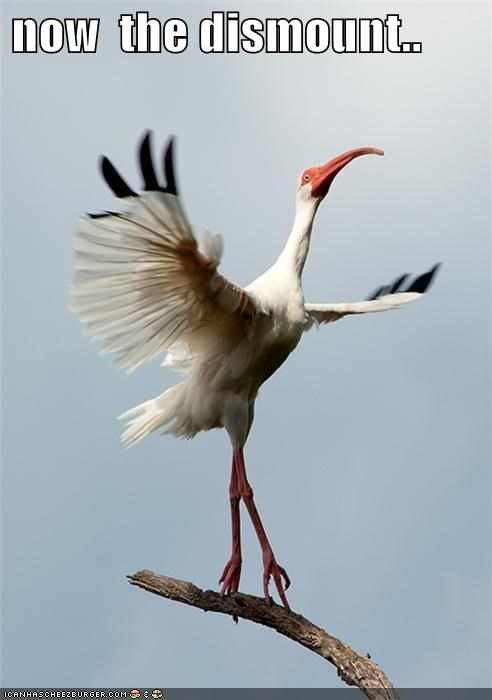 bird,caption,captioned,competing,dismount,gymnastics,now,perching,performing,poise,posture