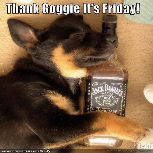 alcohol german shepherd jack daniels puppy sleeping thank-goggie-its-friday whiskey - 4356684032