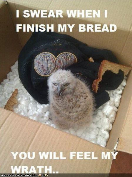 angry,bird,box,bread,caption,captioned,chick,I Can Has Cheezburger,wrath