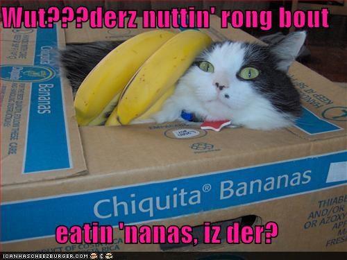 Cheezburger Image 4356791040