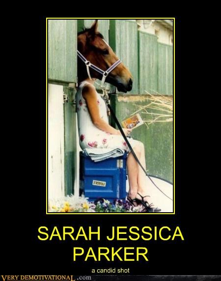 celeb horse sarah jessica parker sex in the city
