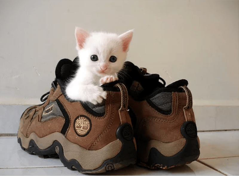 a cute list of animals wearing shoes or just hanging out in them